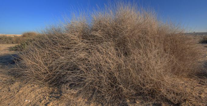 big brown bush